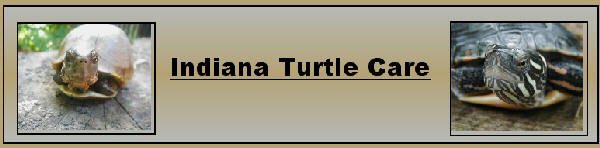 Indiana Turtle Care